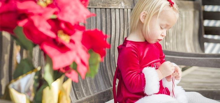 weihnachtsstern wie giftig die giftpflanze ist kidsgo. Black Bedroom Furniture Sets. Home Design Ideas